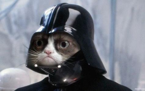 Cats end terrorism?