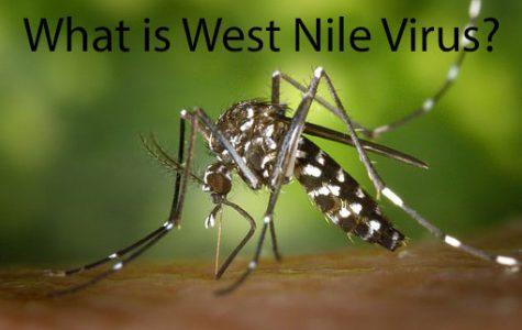 West Nile Virus in Alliance