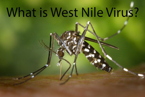 West Nile Virus in Alliance