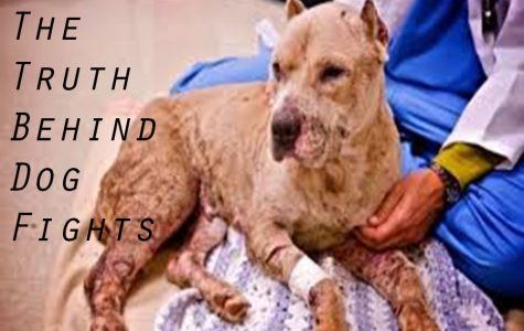 The World of Dog Fighting