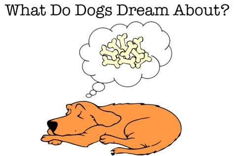 Dog Dreams